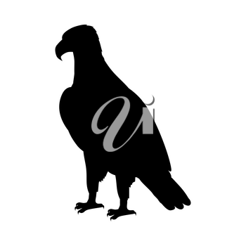 Bald eagle vector. Predatory birds wildlife concept. North America fauna illustration. Picture for national symbolics, encyclopedia, books illustrating. Isolated on white.