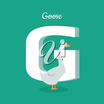 Animal alphabet vector concept. Flat style. Zoo ABC with domestic bird. Fatty goose standing on green background, letter G behind. Educational glossary. For children s books, textbooks illustrating