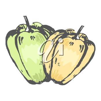 Green and orange sweet peppers isolated sketch in pastel tones on white background. Organic fresh vegetables drawn vector illustration.