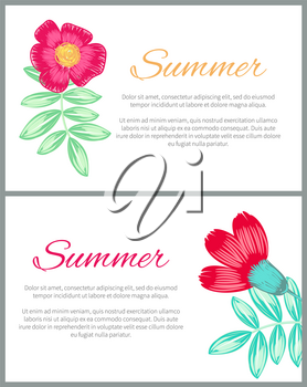 Summer theme colorful posters with beautiful plants on white background. Vector illustration with pencil drawn red and pink flowers and green leaves