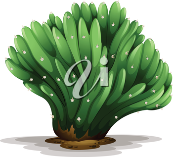 Illustration of a Trichocereus pachanoi forma cristata on a white background
