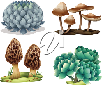 Illustration of cactus and mushrooms on a white background