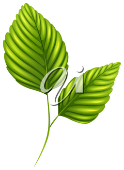 Illustration of the green leaves on a white background