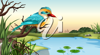 Illustration of a river kingfisher