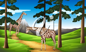 Illustration of the giraffes in the forest