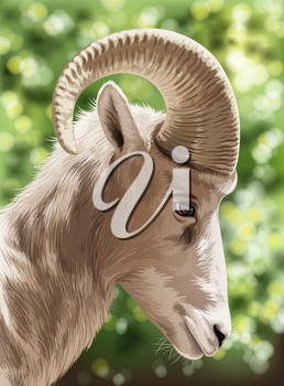 An image of a wild goat