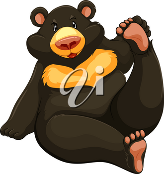 One fat bear on a white background