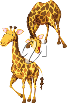 Giraffes in standing and bending pose