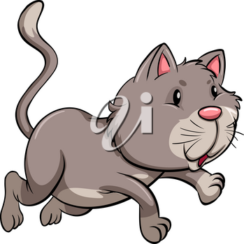 A gray cat on a white background