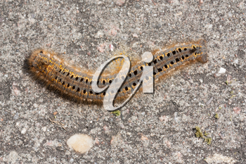 A caterpillar on a stone