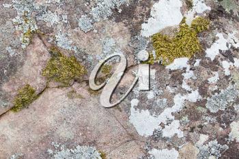 Close-up of a big rock with algea and moss