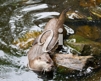 Affectionate otters, wild animals bonding, animal love and affection