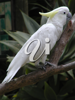 Cockatoo Pictures, Photos and Photographs