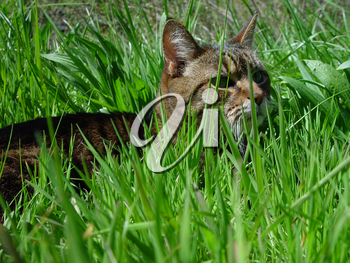 Stock Image of a Cat Hunting in The Grass