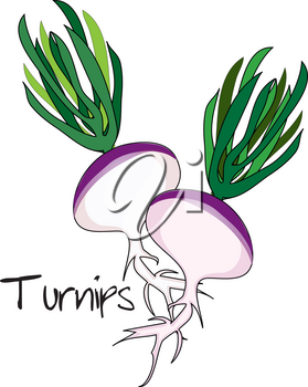 Clip Art Illustration of Turnips With Greens