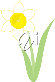 Royalty Free Clipart Illustration of a Daffodil