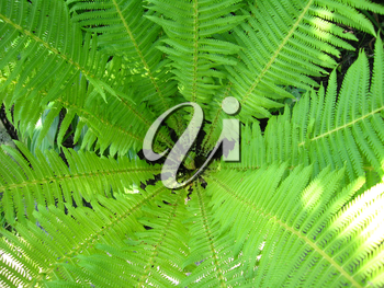 image of nice pattern from green leaves of fern