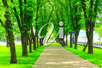 path in the city with big green trees