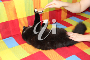 Mistress combing her cat. Caring for cat fur. Woman hand combing by comb black and white fluffy cat. Taking care of domestic pet. Enjoy and happy pet