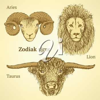 Sketch zodiac signs, lion, aries and taurus