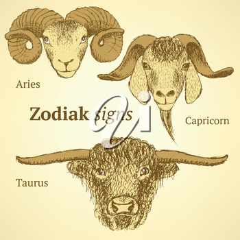 Sketch bull, goat and ram head in vintage style, background