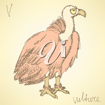 Sketch fancy vulture in vintage style, vector