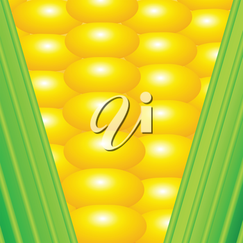 colorful illustration with an ear of corn for your design
