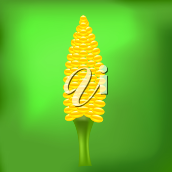 Yellow Cob Corn on Abstract Green Light Background