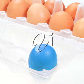 one separate blue chicken egg against several brown eggs