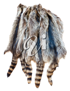 material for fur clothing - several natural raccoon pelts