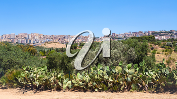 travel to Italy - garden and view of Agrigento town from Valley of the Temples in Sicily