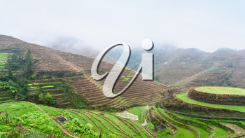 travel to China - above view of terraced rice grounds on hills from Tiantouzhai village in area Dazhai Longsheng Rice Terraces (Dragon's Backbone terrace, Longji Rice Terraces) country in spring