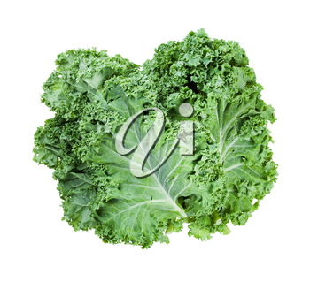 stack of fresh green leaves of curly-leaf kale (leaf cabbage) isolated on white background
