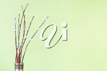 pussy willow sunday (palm sunday) feast concept - bunch of flowering pussy-willow twigs in vintage pewter jug on green pastel background with copyspace