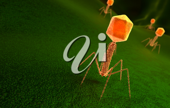 Bacteriophage virus particle on bacteria surface. 3D illustration