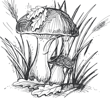 hand drawn, cartoon, sketch illustration of mushroom