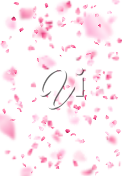 A lot of falling petals on white background. Vector spring template.