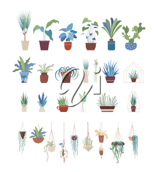 Houseplants in pots flat vector illustrations set. Clay flowerpots with home flowers, interior design elements pack. Greenery, domestic plants collection isolated on white background