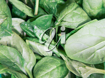 Organic Baby Spinach. Baby Is A Variety Of Spinach With Flat, Spade-Shaped Leaves That Are Soft And Tender In Texture