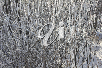 A snow-covered and frozen shrubbery 30379