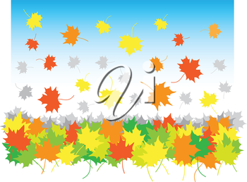 falling maple leaves in heap on the white background
