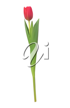 Realistic Vector Illustration Colorful Tulips . Not Trace. Pink Flowers on Light Background. EPS10