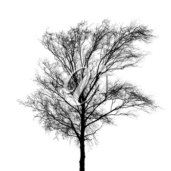 Black bare tree photo silhouette isolated on white background