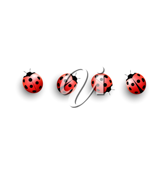 Four lady bugs with shadows on white background