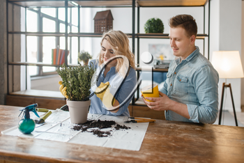 Young couple changes the soil in home plants, florist hobby. Man and woman takes care and growing of domestic flowers, gardening