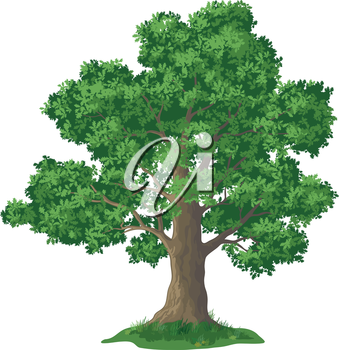 Oak tree with leaves and green grass, isolated on white background. Vector