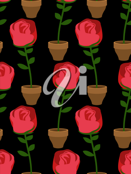 Rose in pot seamless pattern. Home Flower texture. Floral ornament