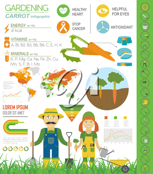 Gardening work, farming infographic. Carrot. Graphic template. Flat style design. Vector illustration