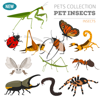 Pet insects breeds icon set flat style isolated on white. Bugs, beetles, sticks, spiders and other collection. Create own infographic about pets. Vector illustration