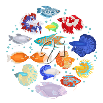 Freshwater aquarium fishes breeds icon set flat style isolated on white. Labyrinth fishes: betta, gourami. Create own infographic about pets. Vector illustration